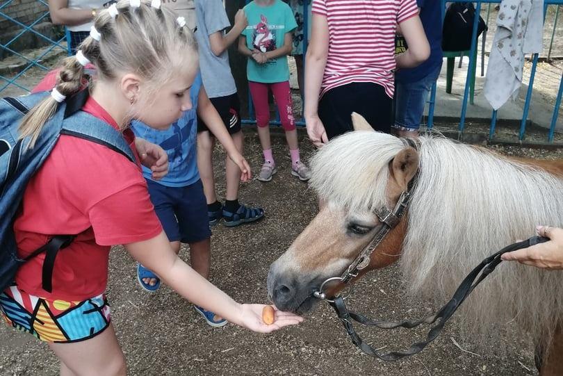 Пони Персик помогает детям-инвалидам