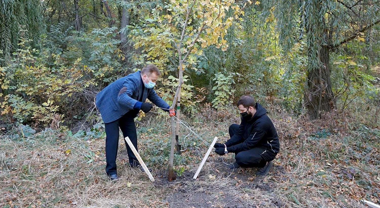 Новые деревья для Таганрога