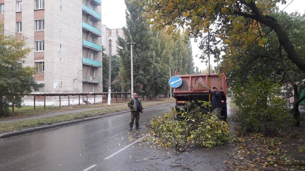 В Таганроге обрезают деревья