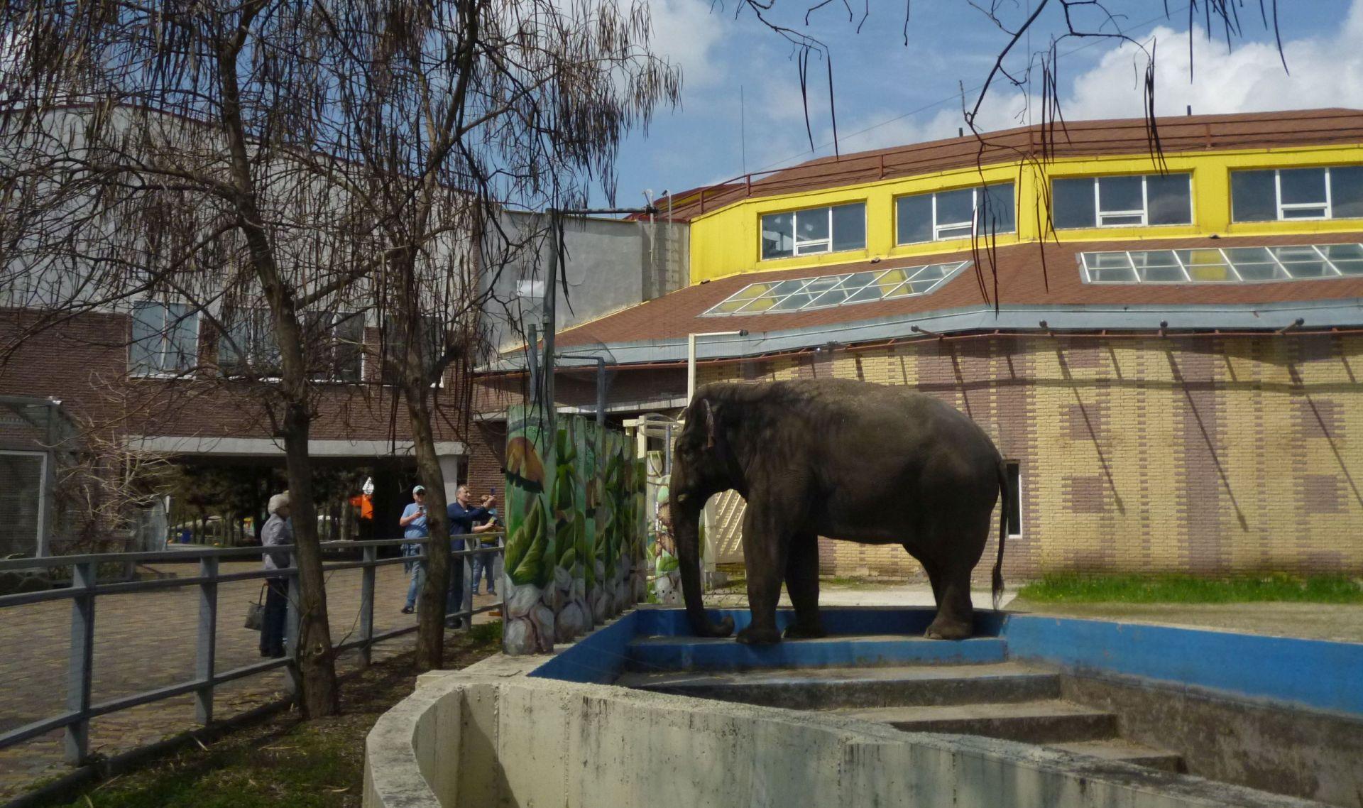Ростовский зоопарк становится всё более открытым