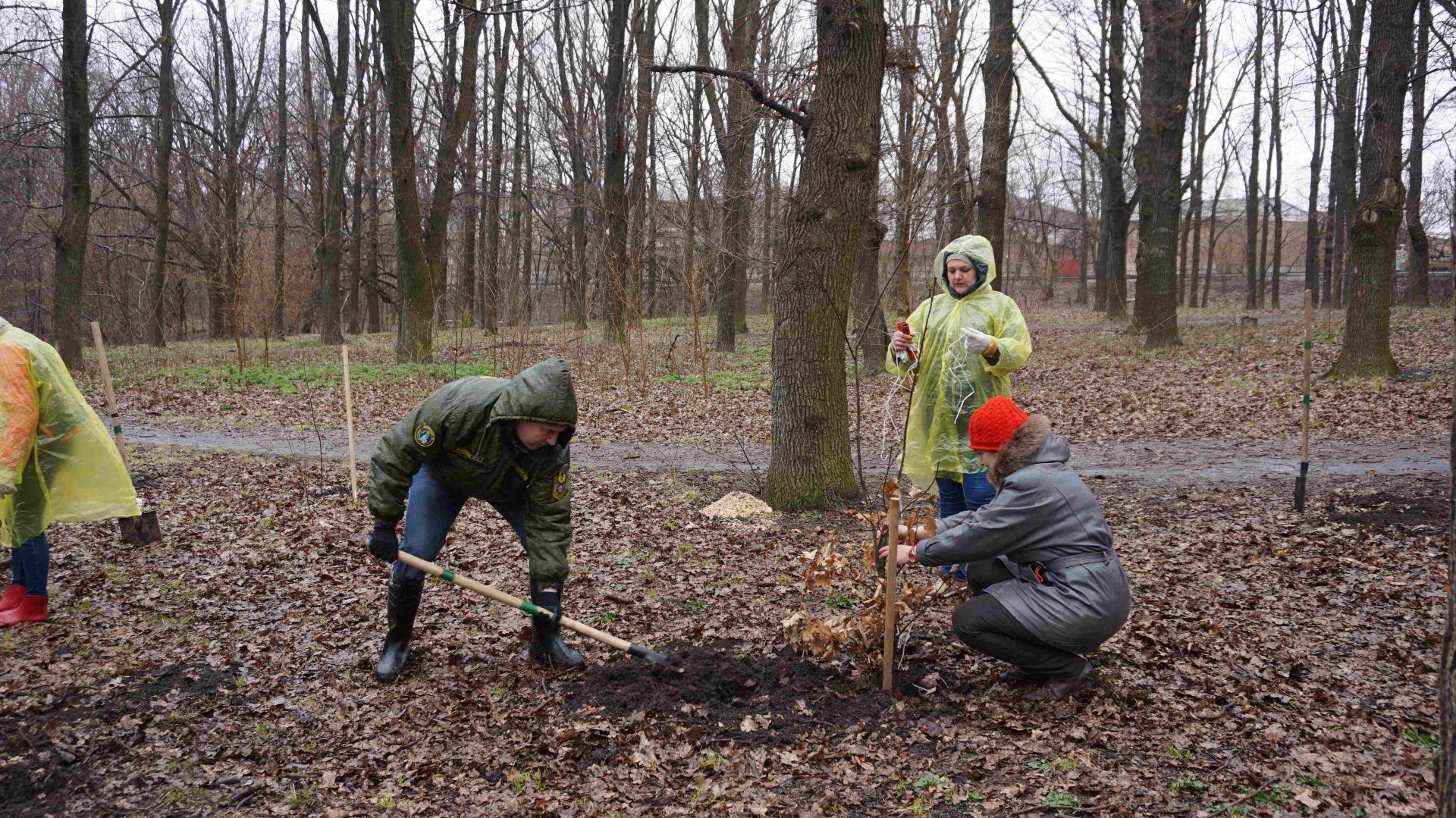 В роще «Дубки» началась высадка деревьев