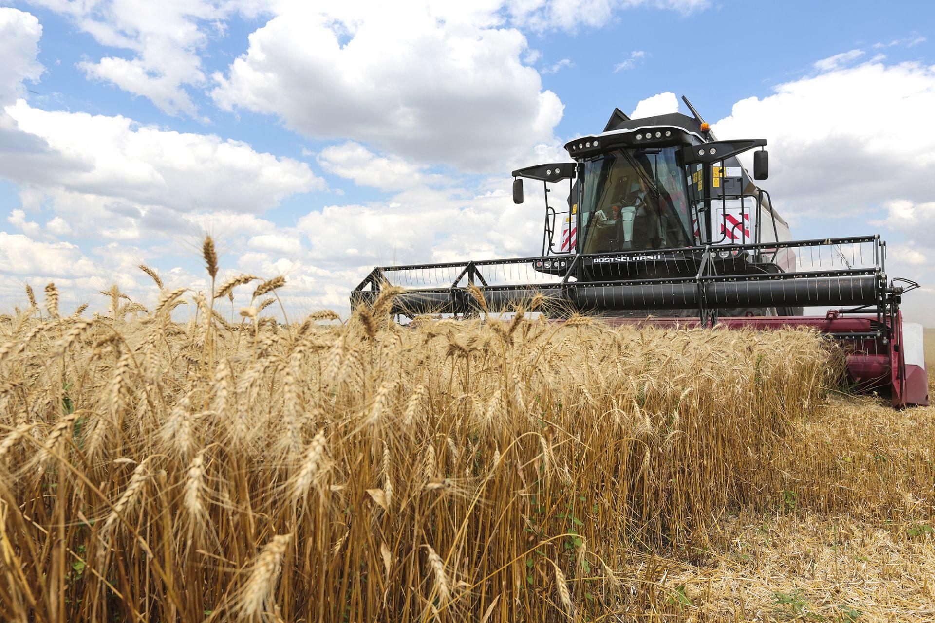 Донские аграрии побили рекорд по сбору ранних зерновых