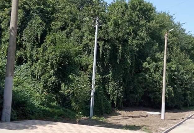 В Таганроге отремонтировали освещение в роще «Дубки»