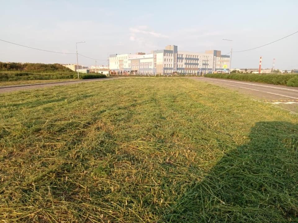 В Таганроге косят траву возле школы на ул. Галицкого