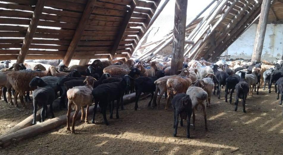 Украинец с отарой овец незаконно пересек госграницу