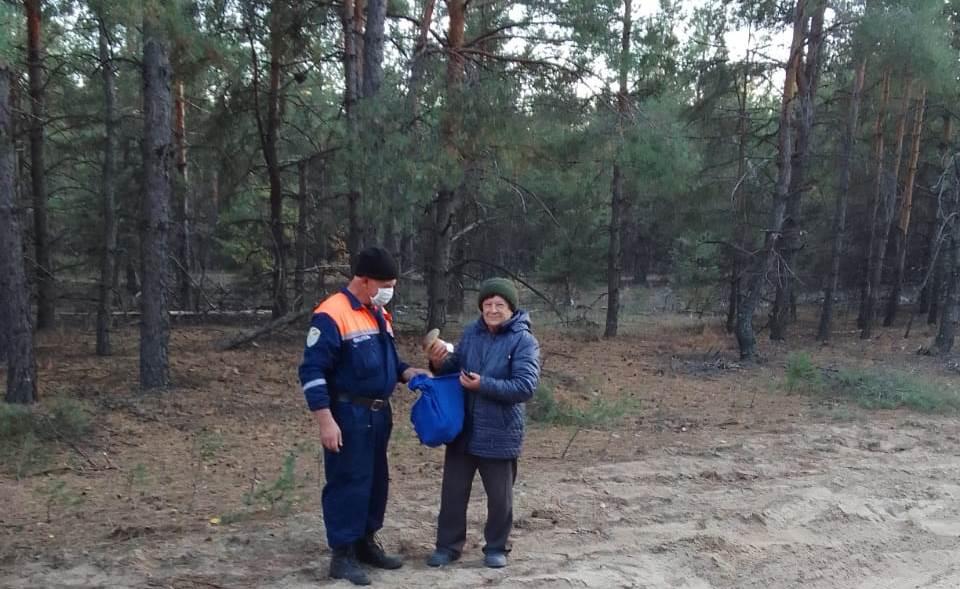 Пошла за грибами: на Дону женщина потерялась в лесу